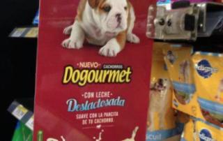 Bulldog Inglés campaña POP La Granja Cachorros